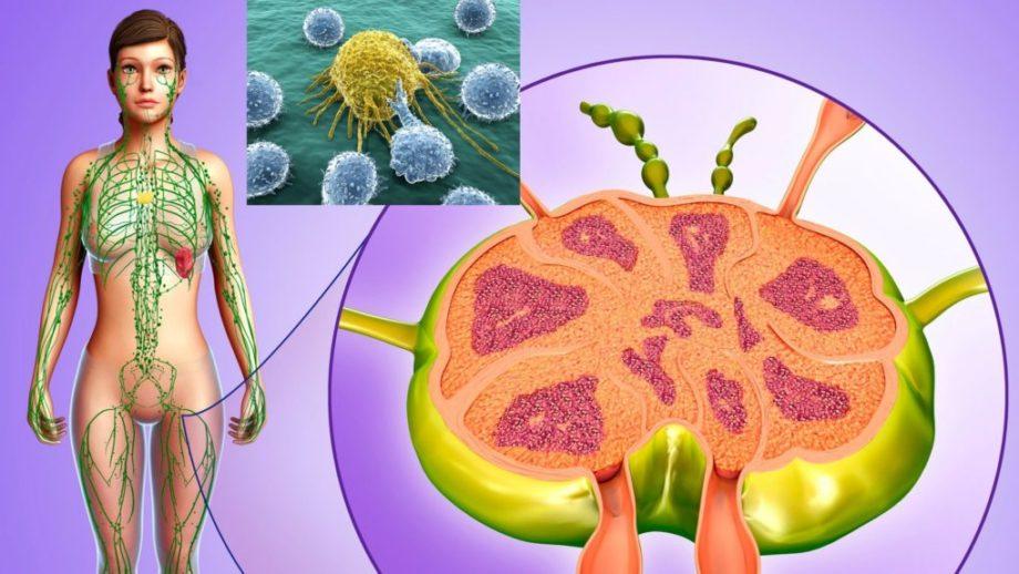 Abwehrsystem, Lymphe, Immunsystem, Yuen Methode