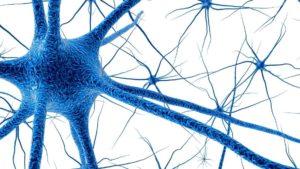 Gehirnstoffwechsel verbessern, Gehirnzellee