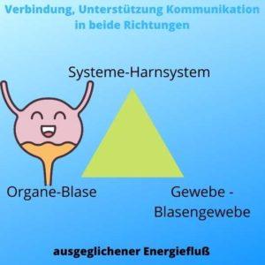 Blasenentzündung energetisch unterstützen, Yuen Methode, Homöopathie