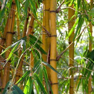 bamboo-1028699_640